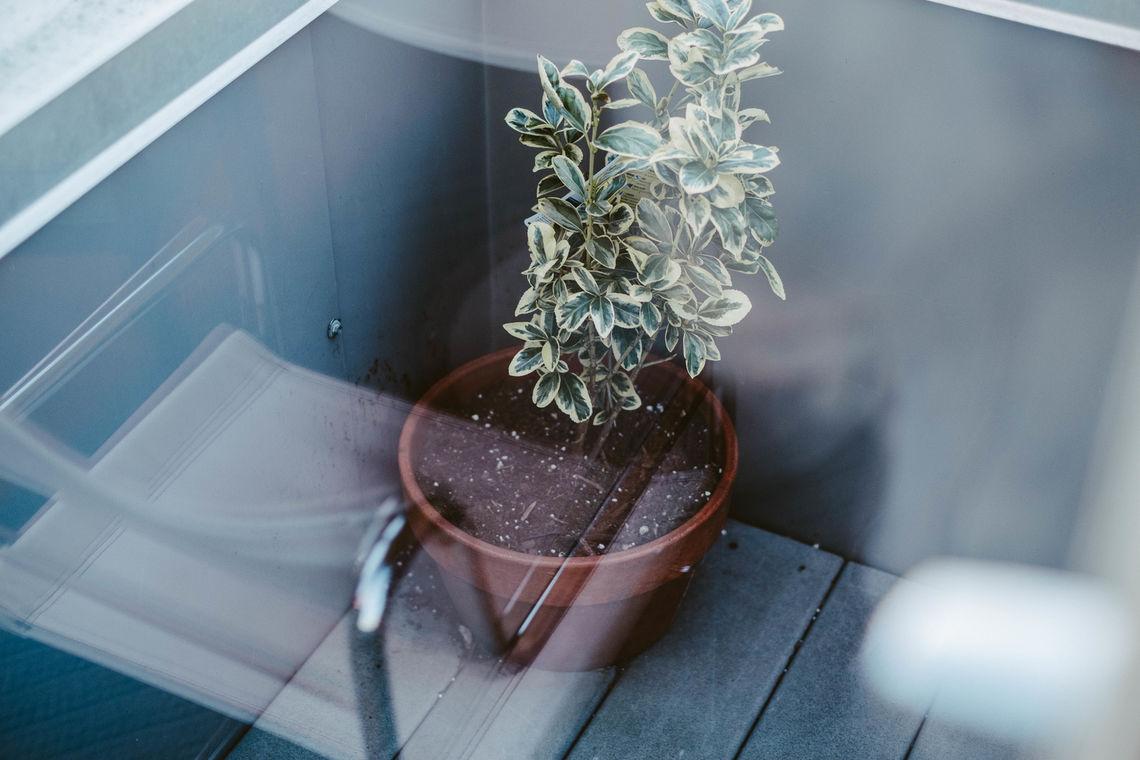 P'unk Plant