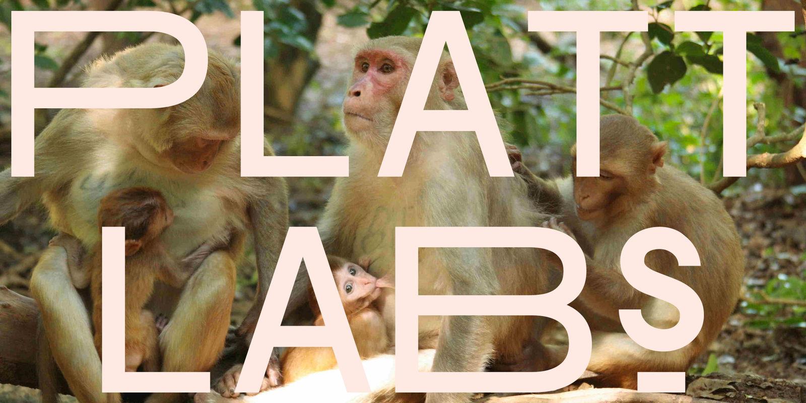 platt labs monkeys